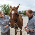 formation autour du cheval