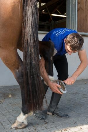 CAPA Elevage équin, valorisation du cheval