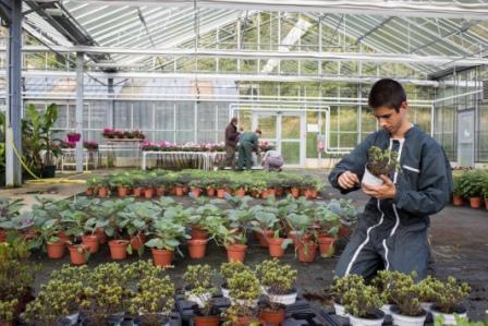 CAPA Horticulture, entretien des espaces